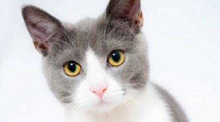 Detta bör du överväga innan du skaffar katt